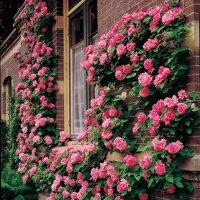 Intrarea in Eden este impodobita cu trandafiri?