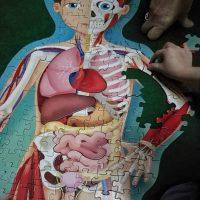 Anatomia distractiva: puzzle de podea cu corpul uman